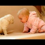 Dogs and Babies