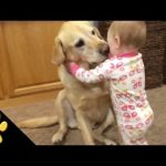 Cute Dogs Adorable Babies Compilation