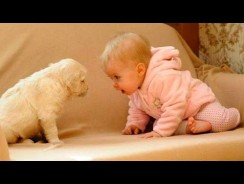 Dogs and Babies Collied – Funny Babies Videos