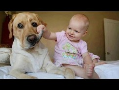 Funny babies annoying dogs – Funny Babies Videos