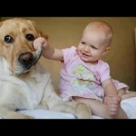 Funny babies annoying dogs