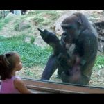 Kids at the zoo compilation 2016