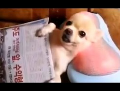 Funny Animals – Funny Videos