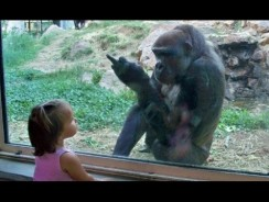 Kids at the zoo compilation 2016 – Funny kids videos
