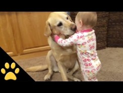 Cute Dogs Adorable Babies Compilation – Funny kids Videos